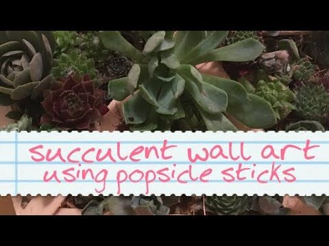 Indoor succulent wall planter – succulent art – succulent picture frame using popsicle lolly sticks