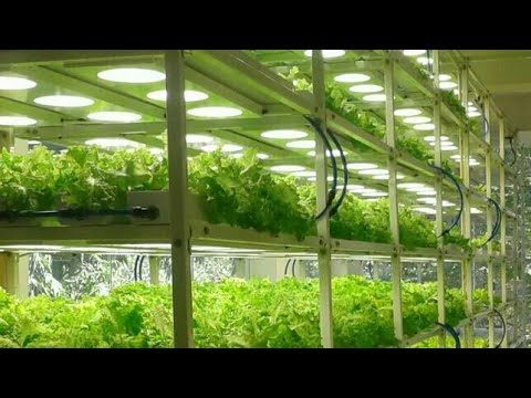Hydroponics,Know all about Hydroponics,Hydroponics in Hindi, Simplified Hydroponics India