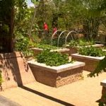Las Vegas Summer Vegetable Garden – How to Grow Food in Extreme Conditions