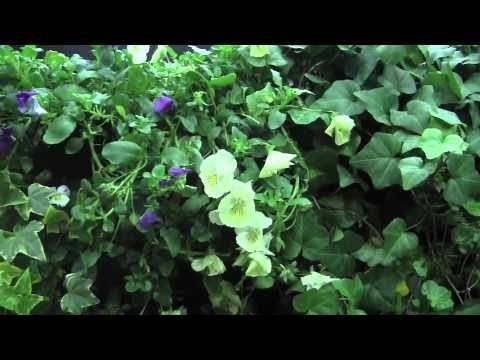 Greenwalls For The Exterior
