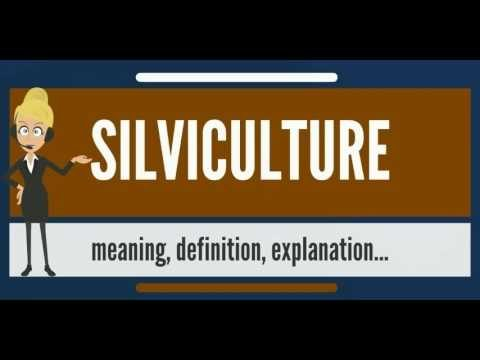 What is SILVICULTURE? What does SILVICULTURE mean? SILVICULTURE meaning, definition & pronunciation