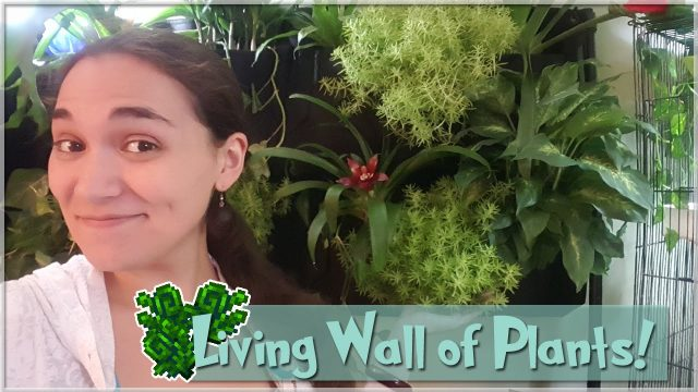 Getting Plants for the Living Wall! • Vlog!