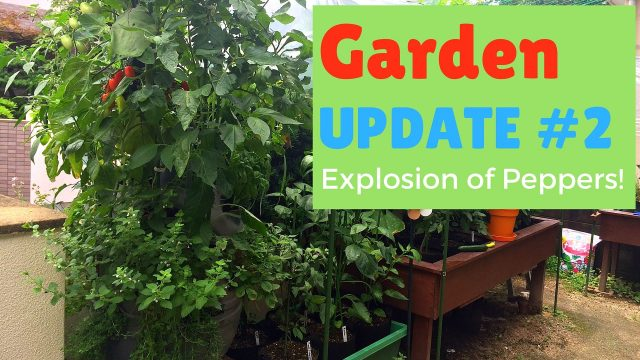 Update #2 – Garden Explosion of Hot Peppers and the Massive Garden Tower