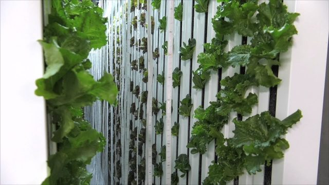 Southeast Georgia Farm Grows Produce Using Hydroponics