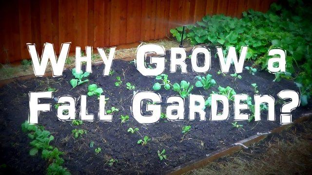 Why Grow a Fall Organic Vegetable Garden?