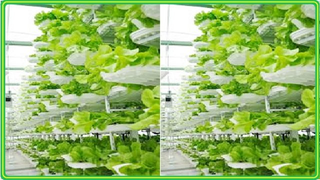 Vertical Aquaponics Systems Design In A Greenhouse