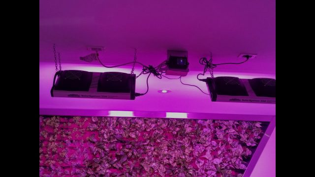 Living wall LED Grow Lights