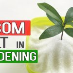 EPSOM SALT IN GARDENING | Benefits in Gardening, Plants and Soil | Garden Tips in English
