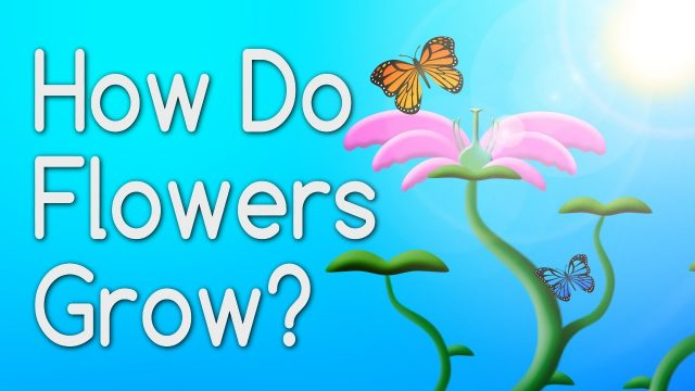 How Do Flowers Grow From Seeds? Educational Video for Kids
