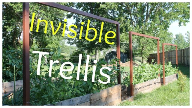 Invisible Trellis – A cheap raised bed trellis system