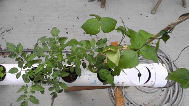 How To Do Build Best Hydroponics Systems For Beginners At Home