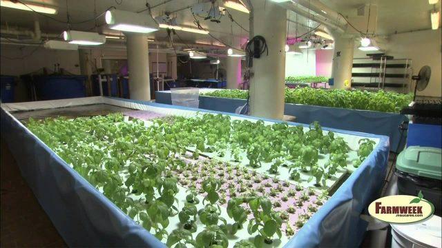 Farmweek Indoor agriculture in Chicago, March 6, 2015
