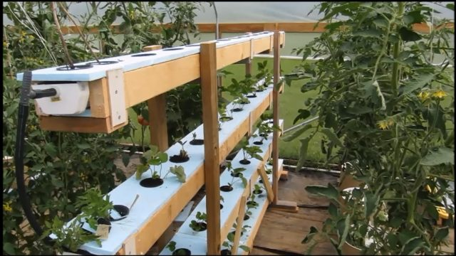 Hydroponics Vertically