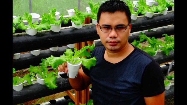 Vertical Hydroponics Research and Development