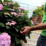 Awesome Williamsburg rooftop garden – Urban Garden video