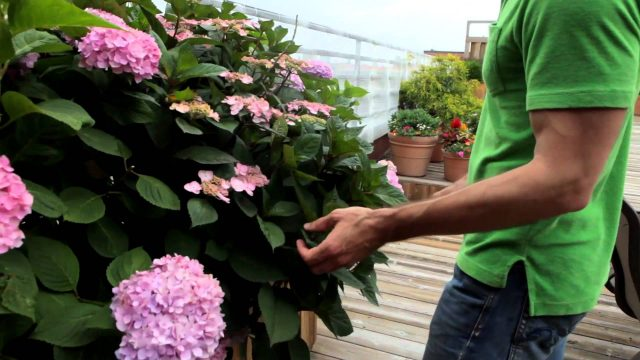 Awesome Williamsburg rooftop garden – Urban Garden video