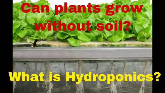 Can plants grow without soil? What is Hydroponics? Explained