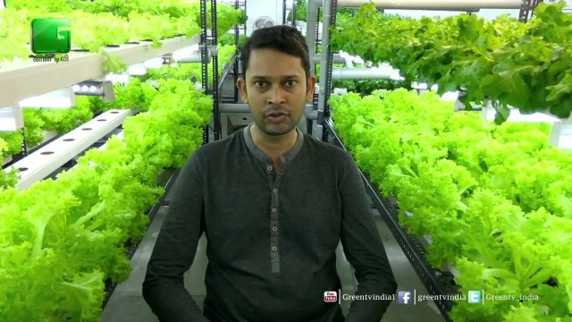 Ajay Naik, CEO- Letcetra Agritech Pvt Ltd talking about hydroponics technique On Green TV