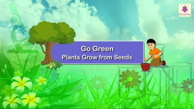 Plants Grow From Seeds | Germination | Science For Kids | Grade 1 | Periwinkle