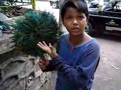 Lingo Kid- Talented Indian Kid speaks many languages