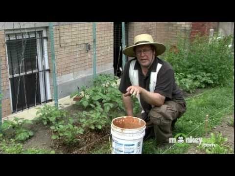 Using Mulch in Your Vegetable Garden