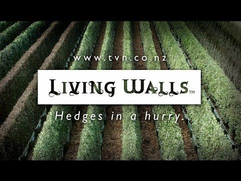 Living Walls™ on Thinking Forward
