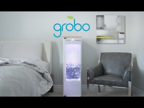 GROBO Indoor gardening machine autonomously grows food for you