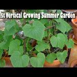 10 Best Vertical Growing Summer Garden – Gardening Tips