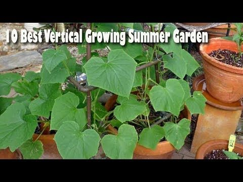 10 Best Vertical Growing Summer Garden – Gardening Tips