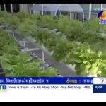 Hydroponic in Cambodia –  Bayon TV – Khmer agriculture 2013