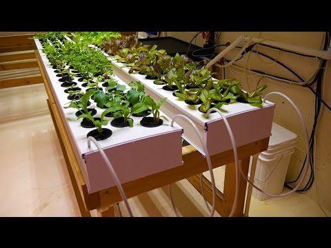 Part 2 – Propagation Table – Basement Hydroponic LED Garden Tour