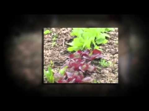 Learn how to start a garden with Living Garden Series