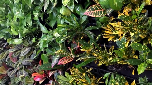 Living Wall Interiorscape for Office – VerTexx Living Wall System