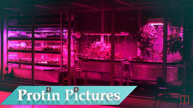 The Ferrari of Farming: Aeroponics
