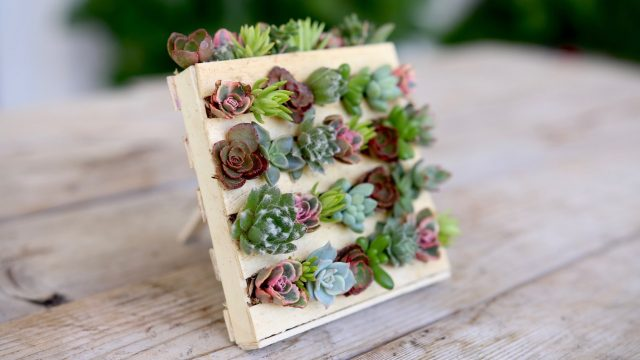 Popsicle Stick Mini Pallet w/ Succulents // Garden Answer