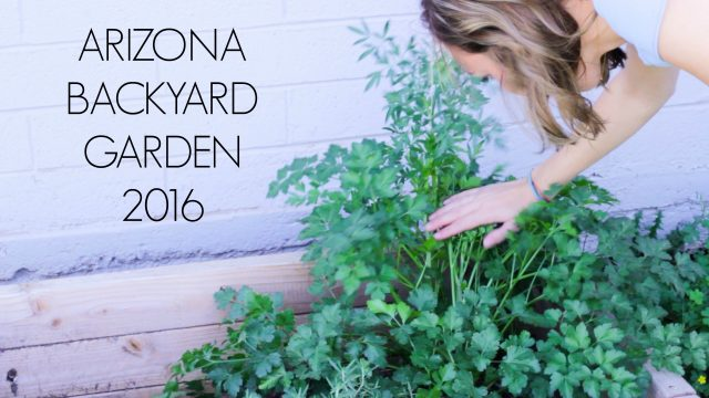 Arizona backyard Garden 2016