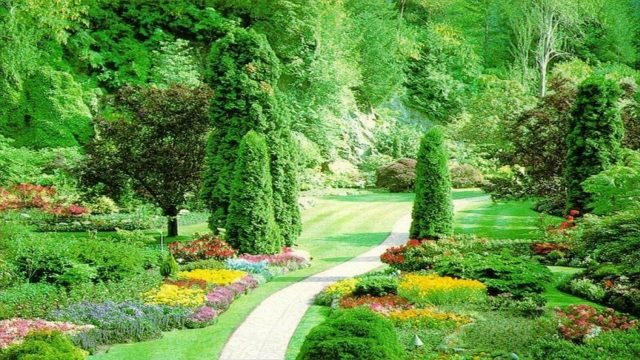 What You Need To Learn In Landscaping Classes – Servicing Designs