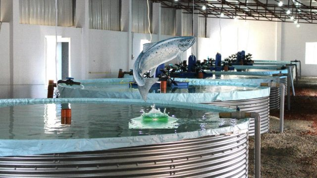 RAS Indoor Fish Farming in Bangladesh