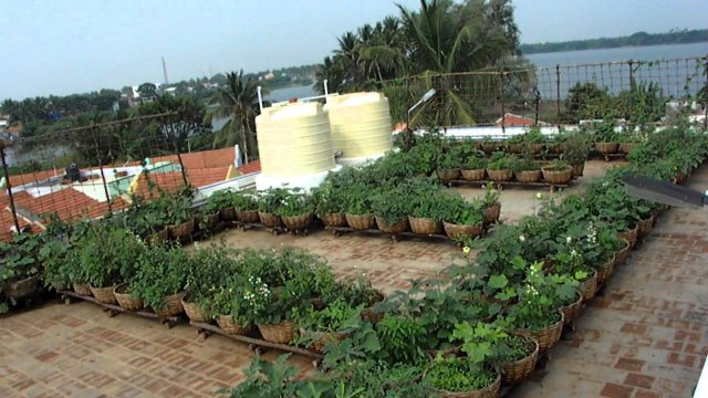Vegetable Roof Garden – Sulur Panchayat Union Office Building