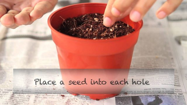 Every Child a Seed Demonstration (Part 2)