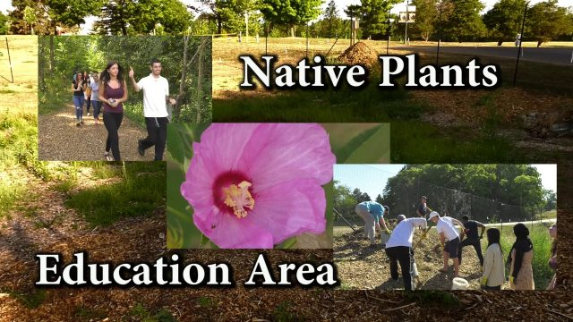 Native Plants Education Area 2016