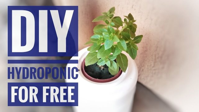 DIY  Small  Hydroponic Setup for Free