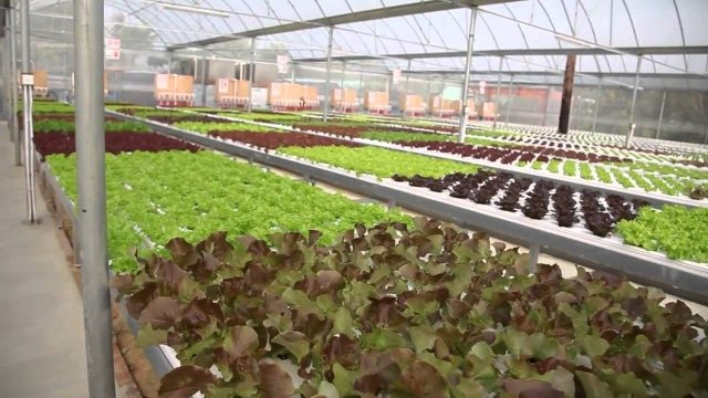 Farm Direct Hydroponics Farm in Hong Kong