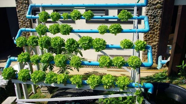 Basics Of Hydroponics – Radical Method Of Cultivation