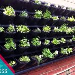 HAVE YOU LOOK THIS? 20+? Cheap and Easy Vertical Garden Ideas 2017