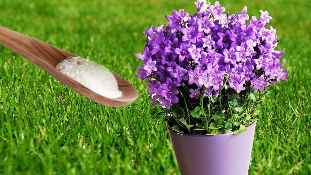 Put Baking Soda On Your Garden Plants and This will Happen