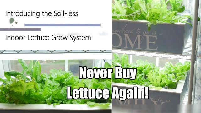 Never Buy Lettuce Again – The Indoor Soil-less Lettuce Grow System, DIY Clean & Easy! 4K