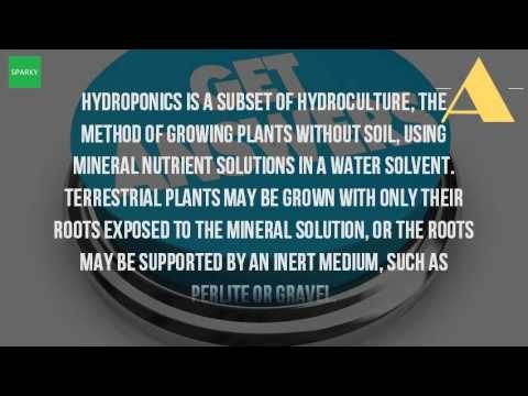 What Is A Hydroponic Farm?