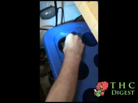 How to Plant Marijuana Seeds in a Hydroponic System – THC Digest