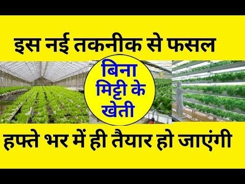 How to start hydroponic farming | Hydroponics farming in hindi